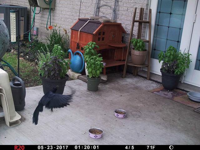 large.Bird01a_20170523_01b.jpg