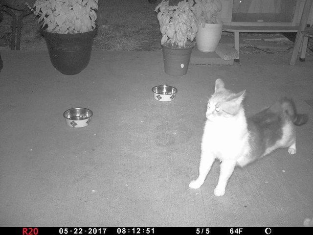Cats01a-20170522-01b.jpg