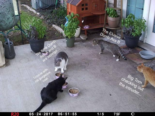large.Cats01a_20170524_01b.jpg