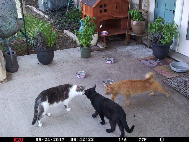 large.Cats01a_20170524_02b.jpg