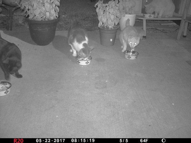 large.Cats02a_20170522_01b.jpg
