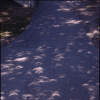 Tree shadow of the eclipes