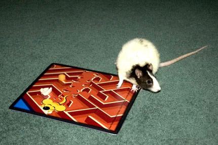 rat-mat.jpg
